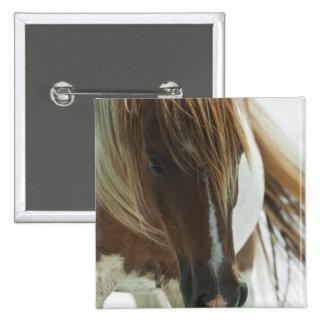 Pin del cuadrado del caballo salvaje del mustango