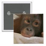 Pin del cuadrado del chimpancé del bebé