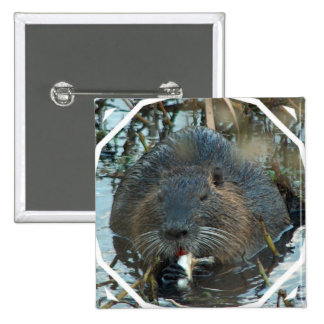 Pin del cuadrado del hábitat de los castores