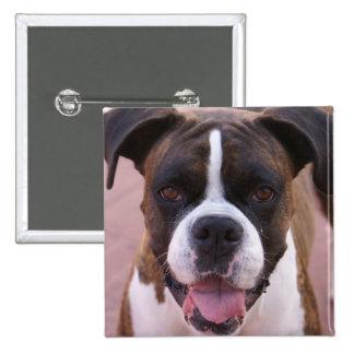 Pin del cuadrado del perrito del boxeador