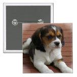 Pin del cuadrado del perro de perrito del beagle