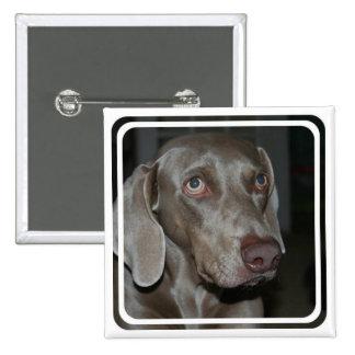 Pin del cuadrado del perro de Weimaraner