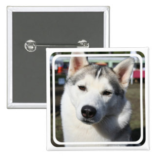 Pin del cuadrado del perro del husky siberiano pin cuadrada 5 cm