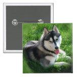 Pin del cuadrado del perro del husky siberiano