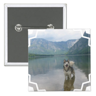 Pin del cuadrado del perro del Malamute Pin Cuadrada 5 Cm