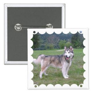 Pin del cuadrado del perro del Malamute de Alaska