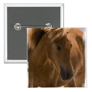 Pin del diseño del caballo de la castaña