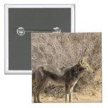 Pin del diseño del coyote