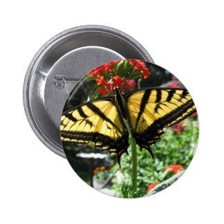 Pin del este de la mariposa de Swallowtail del tig Pin Redondo 5 Cm