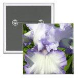 Pin del iris barbudo