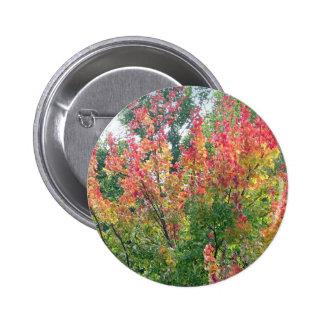 Pin del otoño