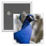 Pin del Peafowl