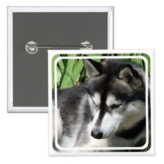 Pin del perfil del husky siberiano pin cuadrada 5 cm