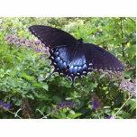 Pin dulce de la mariposa esculturas fotográficas