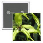 Pin exótico de la orquídea