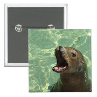 Pin hablador del león marino