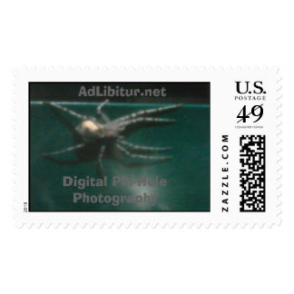 Pin Hole Spider I Postage