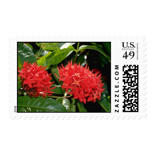Pin Ixora flowers Postage Stamps