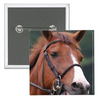 Pin lindo del caballo de la castaña