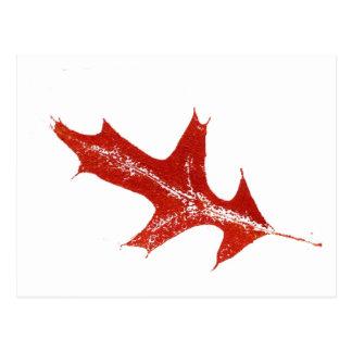 """Pin Oak Red"" Country Roads Postcard"