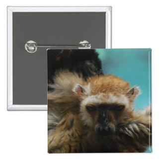 Pin observado azul del Lemur