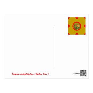 Pin&Pon Popdagana Postcard
