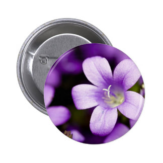 Pin púrpura del Campanula