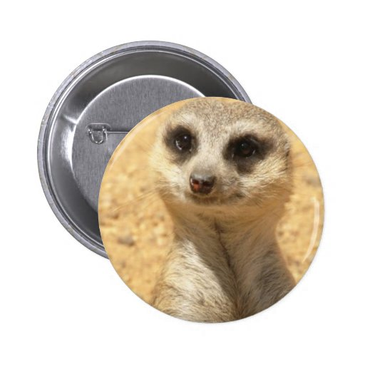 Pin redondo curioso de Meerkat
