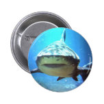 Pin redondo del tiburón