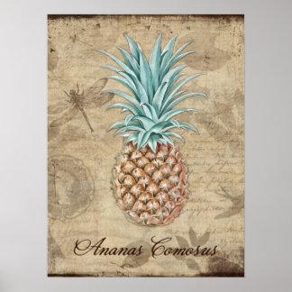 Piña Comosus - historia natural Posters