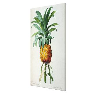 Piña del Bromelia de Les Bromeliacees Lona Envuelta Para Galerias