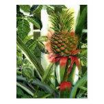 Piña en la selva tarjeta postal