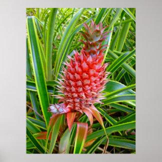 Piña hawaiana póster