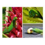 Piña linda Hawaii del rosa del gecko del día del Postal