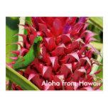 Piña linda Hawaii del rosa del gecko del día del Tarjeta Postal