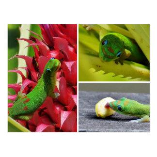 Piña linda Hawaii del rosa del gecko del día del Tarjetas Postales
