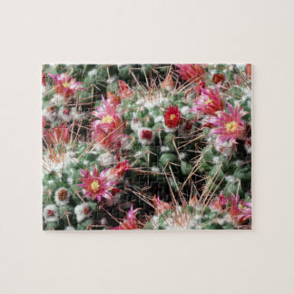 Pincushion Cactus Flowers Difficult Jigsaw Puzzle