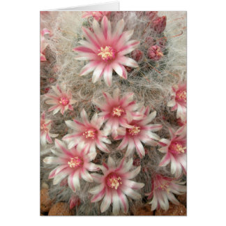 Pincushion cactus with pink flowers greeting card