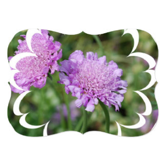 Pincushion Flowers 5x7 Paper Invitation Card