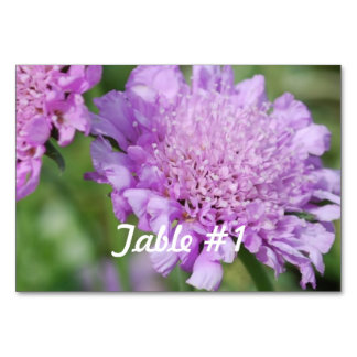 Pincushion Flowers Table Cards