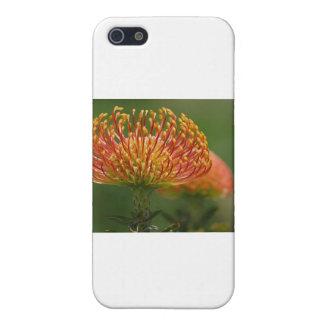 pincushion-protea case for iPhone SE/5/5s