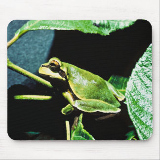 Pine Barrens tree frog Mousepad