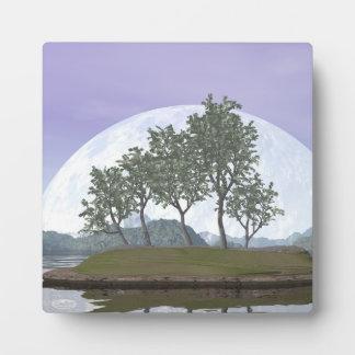 Pine bonsai - 3D render Plaque