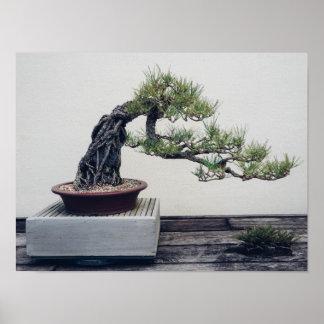 Pine Bonsai Poster