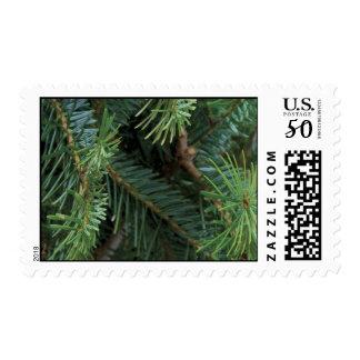 Pine Boughs Christmas Postage Stamp