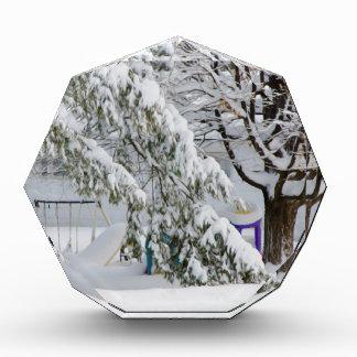 Pine branch tree under snow awards