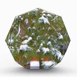Pine branch under snow acrylic award