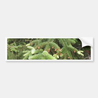 Pine Branches Bumper Sticker