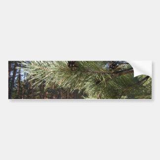 Pine Bumper Sticker