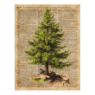 Pine,Cedar Tree,Christmas Tree Dictionary Art, Postcard
